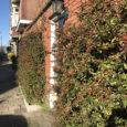 Na het succes van Operatie Steenbreek pakken we nu blinde muren en gevels aan. Daarom zoekt team Groene Vruchtenbuurt vrijwilligers voor de actie Groene Gevels op zaterdagochtend 16 maart. Tijdens […]